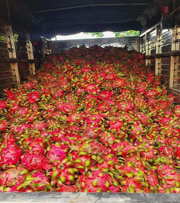 cho thuê xe tải chở thanh long tại Tiền Giang
